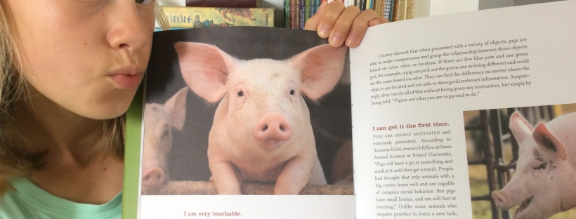 Saving pigs on the loose